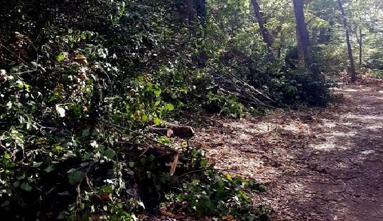 Bilan de l'état de santé de nos arbres