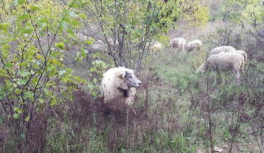 Revenons à nos moutons !