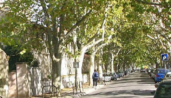 Replantation des arbres du quartier