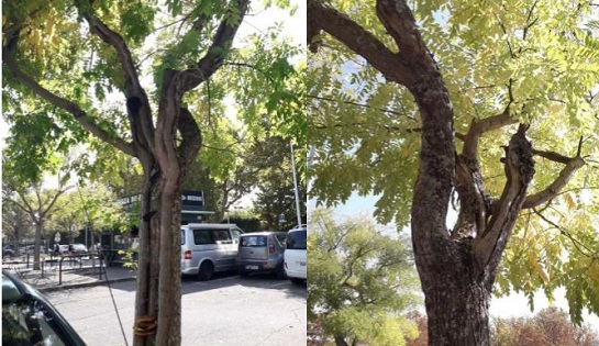 L'adieu aux arbres…